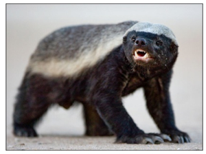 Blog like a honey badger – Suddenly Marketing