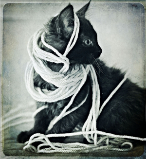 tangle kitty